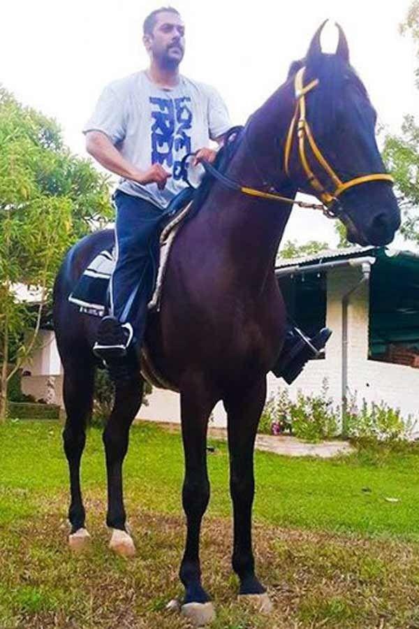 salman khan horse